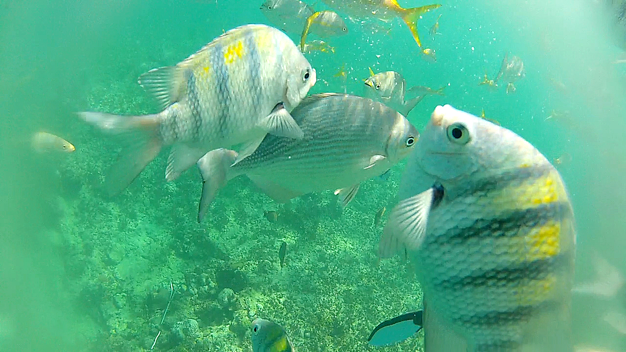 Snorkeling with the fish in Varadero, Cuba
